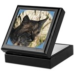 Bobcat in Brush Keepsake Box