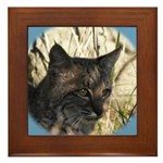 Bobcat in Brush Framed Tile