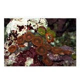 Reef Life Postcards (Package of 8)