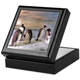 Penguins from Antarctica Keepsake Box