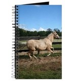Peruvian Paso Journal
