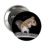 """Surfer Squirrel2.25"""" Button"""