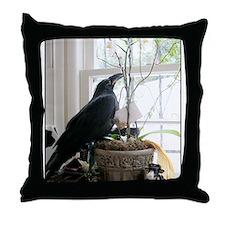 Blue-Eyed Baby Raven Throw Pillow