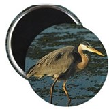 "Great Blue Heron 2.25"" Magnet (100 pack)"