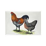 Ameraucana Fowl Rectangle Magnet (10 pack)