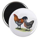 """Ameraucana Fowl 2.25"""" Magnet (100 pack)"""