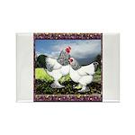 Framed Brahma Chickens Rectangle Magnet (100 pack)