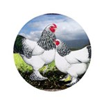 "Framed Brahma Chickens 3.5"" Button (100 pack)"
