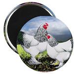 """Framed Brahma Chickens 2.25"""" Magnet (10 pack)"""