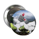 "Framed Brahma Chickens 2.25"" Button (10 pack)"