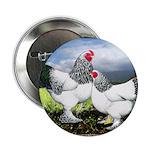 "Framed Brahma Chickens 2.25"" Button"