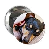 "Chi-Weenies.com 2.25"" Button (100 pack)"