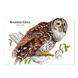 Barred Owl Postcards (Package of 8)