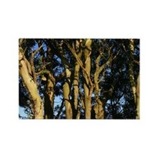 SF Bay Gifts - Trees Rectangle Magnet