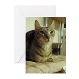 Sokoke Greeting Cards (Pk of 10)