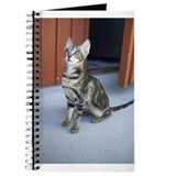 Sokoke Kitten Journal