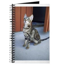 Sokoke Kitten Journal