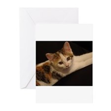 Cute Calico Greeting Cards (Pk of 10)