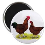 Red Broiler Chickens 2 Magnet
