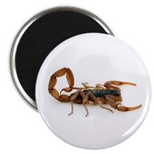 "Scorpion 2.25"" Magnet (10 pack)"