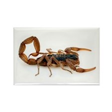 Scorpion Rectangle Magnet (10 pack)