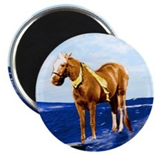 Mr Ed Surfs Magnet