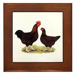 Dk Red Broiler Chickens Framed Tile