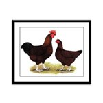 Dk Red Broiler Chickens Framed Panel Print