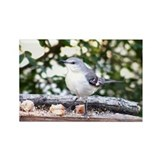 Mockingbird Rectangle Magnet