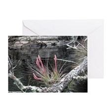 Chatta hoochee River Beauty Greeting Card