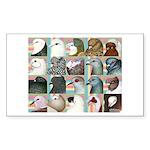 Twenty Pigeon Heads Rectangle Sticker