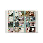 Twenty Pigeon Heads Rectangle Magnet (10 pack)