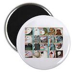 "Twenty Pigeon Heads 2.25"" Magnet (100 pack)"