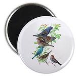 Grosbeaks & Buntings Magnet