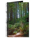 Afternoon sunlight through the redwoods Journal