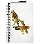 Red-shouldered Hawk Journal