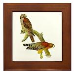Red-shouldered Hawk Framed Tile
