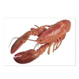 A Lobster on Your Postcards (Package of 8)