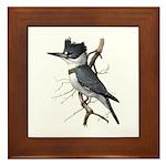 Fuertes' Kingfisher Framed Tile