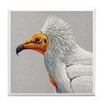 Fuertes' Egyptian Vulture Tile Coaster