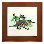 Belted Kingfisher Framed Tile