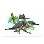 Belted Kingfisher Postcards (Package of 8)