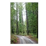 A drive through the Redwood Forest Postcards