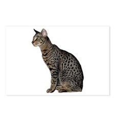 Savannah Cat Postcards (Package of 8)