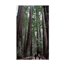 Muir Woods, California Rectangle Decal