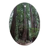 Muir Woods, California Oval Ornament