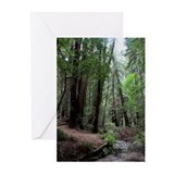 Muir Woods, California Greeting Cards (Pk of 20)