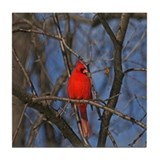 Male Cardinal Photograph Tile Coaster