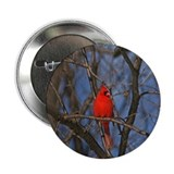 "Male Cardinal Photograph 2.25"" Button (10 pack)"