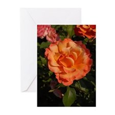 Orange Tipped Orange Rose Greeting Cards (10 Pk)